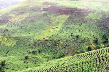 Cameroun : les vrais chiffres de la présence chinoise sur des terres agricoles